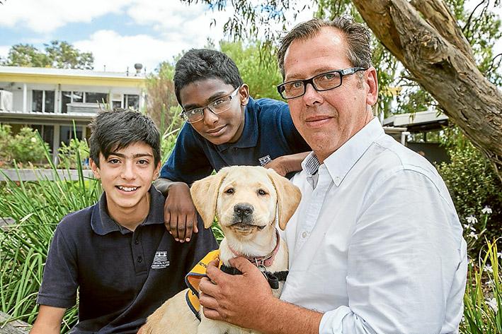 Dog Training Frankston