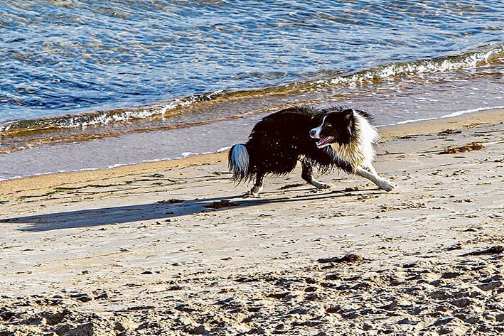 Mordialloc Beach Dog Restrictions